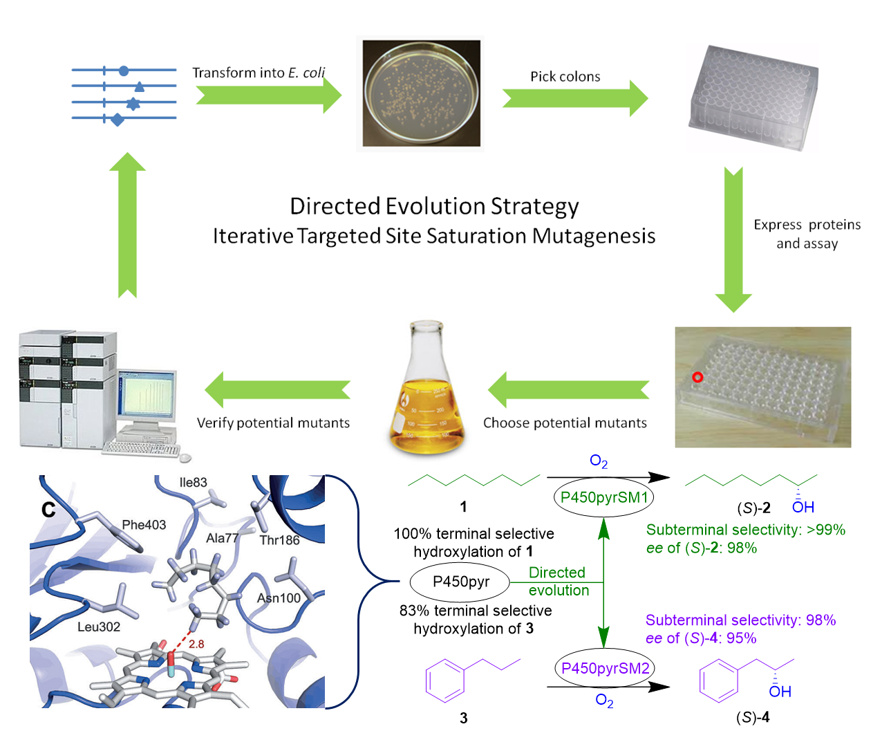 enzyme biocatalysis Our biocatalysis development services allow us to provide our customers with highly pure regio-, chemo- and enantioselective compounds.